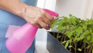 Как уничтожить белокрылку на комнатных цветах? 133