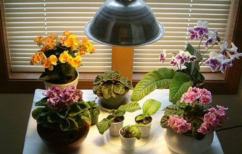 Подсветка для цветов