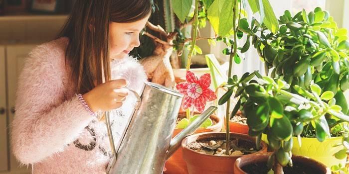 Какой водой поливать цветы комнатные