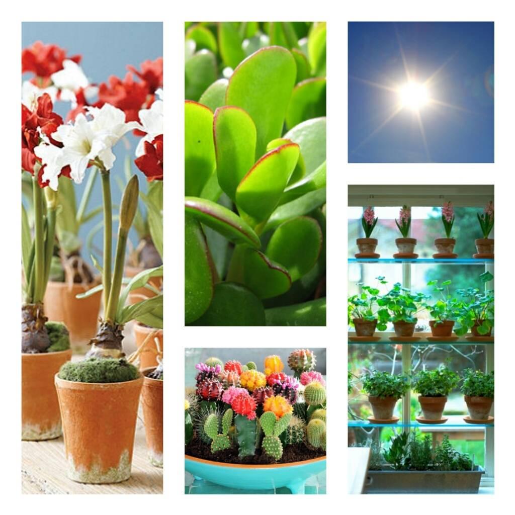 Комнатные растения которые любят солнце