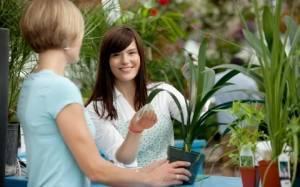 Комнатные растения уход за ними