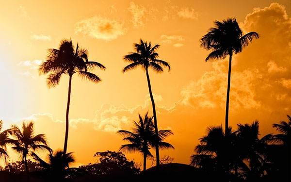 Пальмы в дикой природе