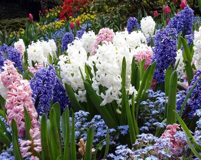 Самые красивые садовые цветы