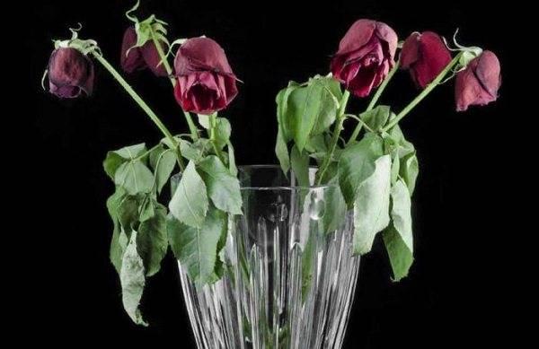 Как оживить розы в вазе