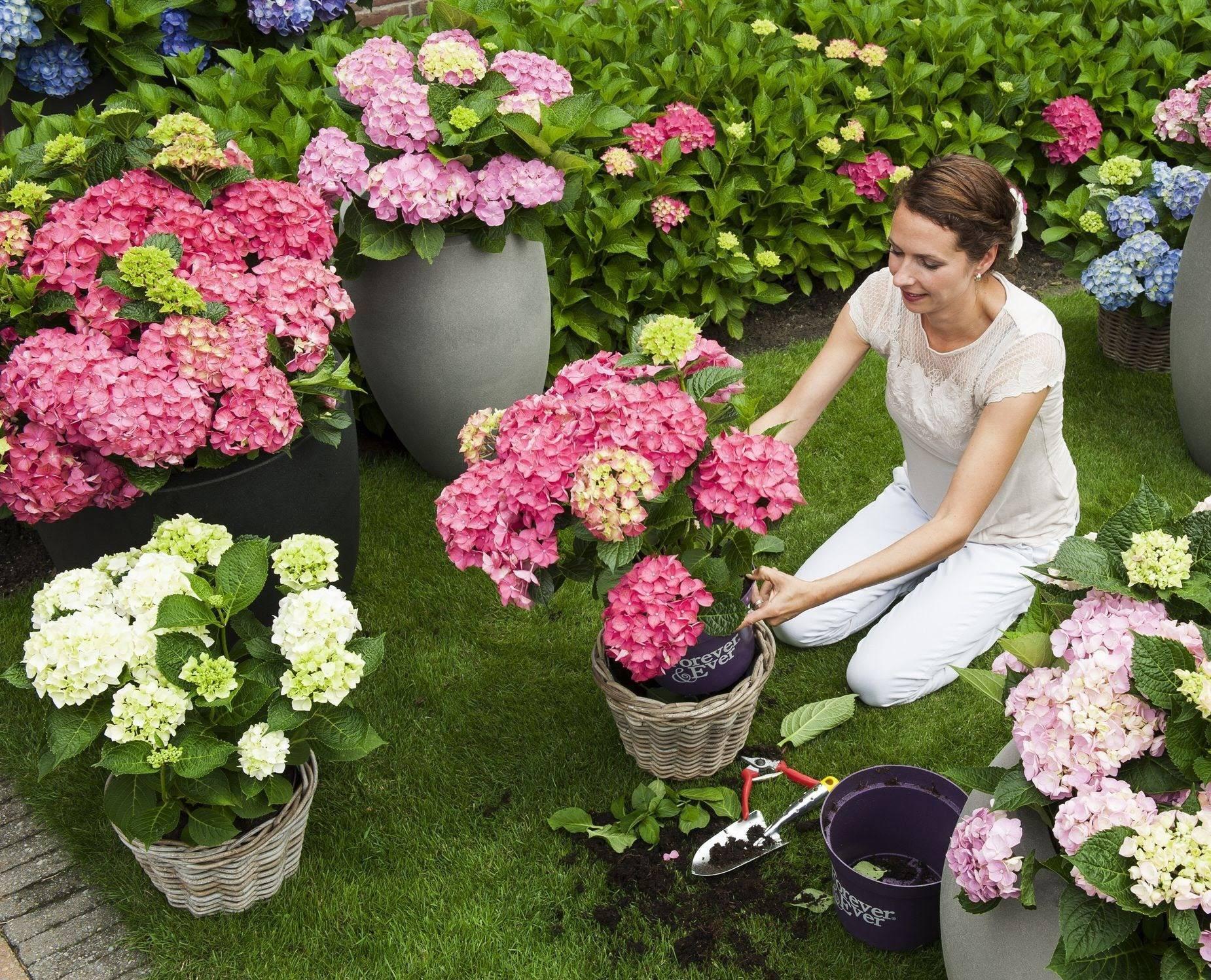 Невесты, где заказать цветы для дачи