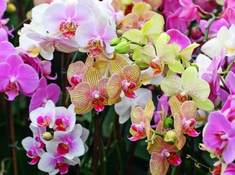 Обрезка орхидеи после цветения в домашних условиях