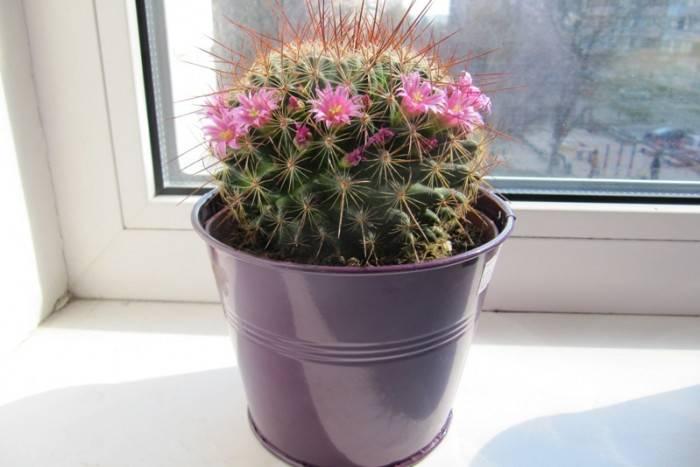 Цветок любви и счастья