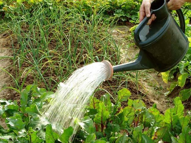 Когда лучше поливать цветы утром или вечером