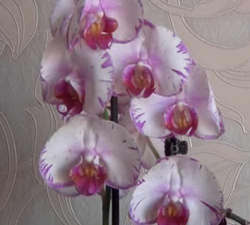 Гидрогель для орхидей