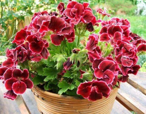 Цветы с шипами