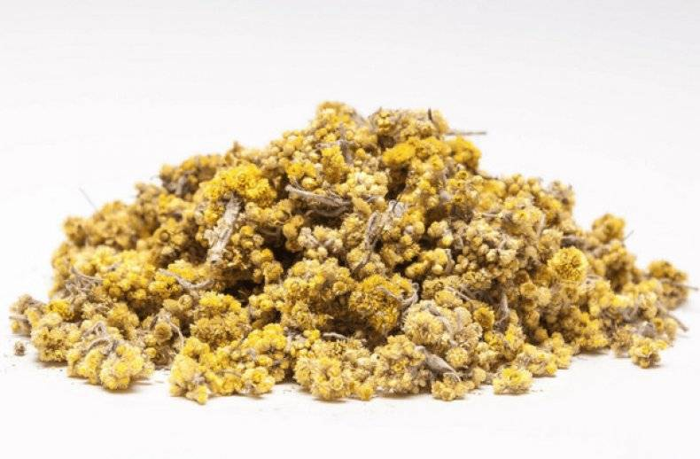 Цветки бессмертника песчаного лечебные свойства