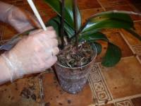 Дренаж для комнатных растений своими руками