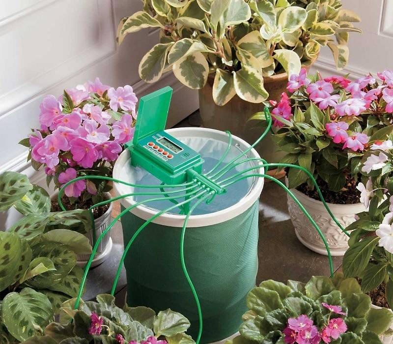 Капельный полив домашних цветов своими руками