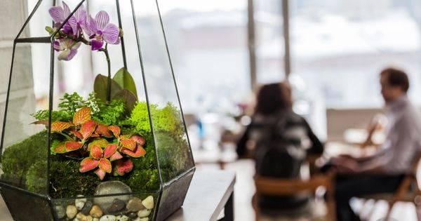 Мини сад в аквариуме своими руками
