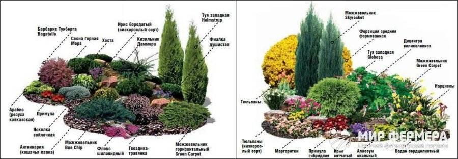 Тенелюбивые хвойные растения