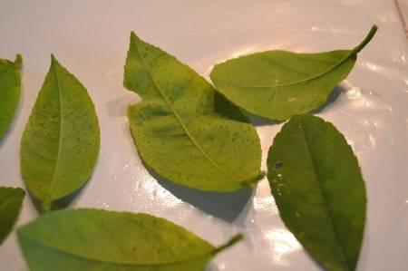 лимон опадают листья