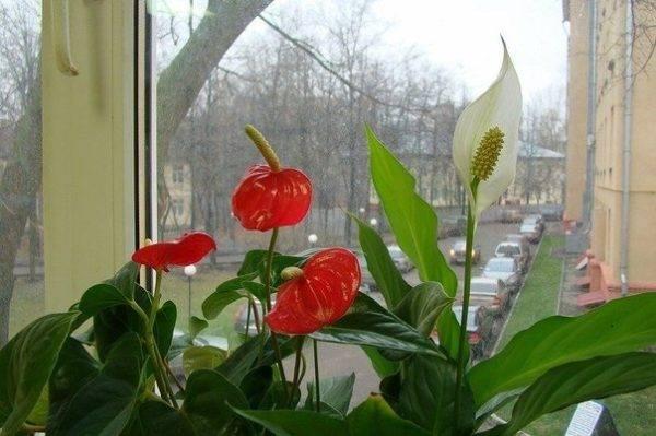 Мужской и женский цветок