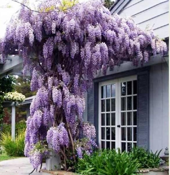 Многолетние плетущиеся растения для сада