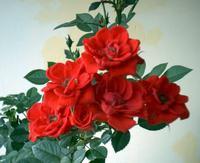 Лев цветок по гороскопу