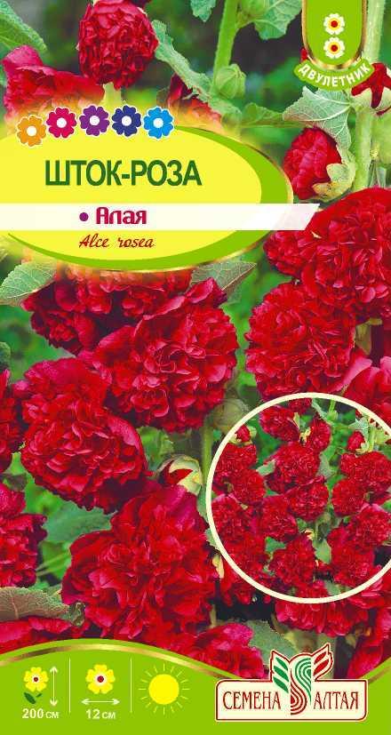 Многолетние розы