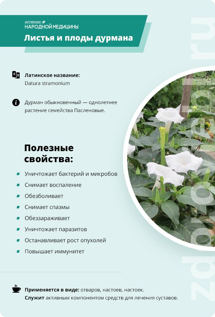 Ядовитое растение дурман