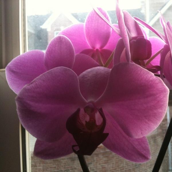 Что делать чтобы орхидея цвела