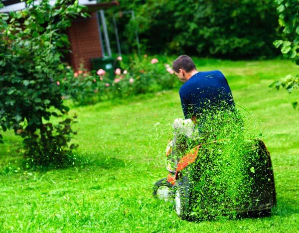 Когда сажать газонную траву на даче