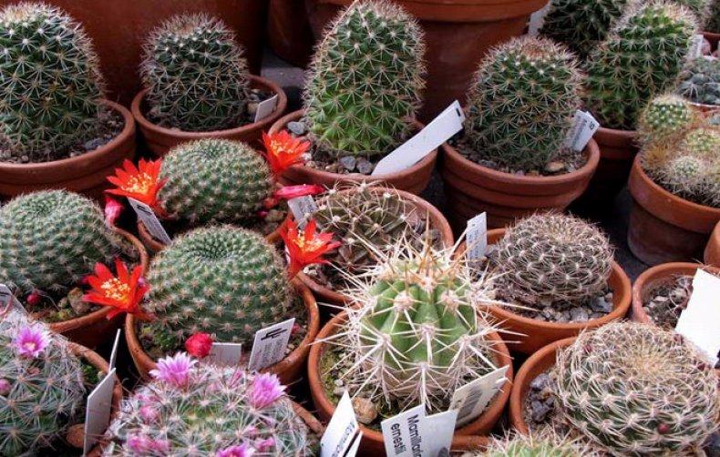 Сколько нужно поливать кактус