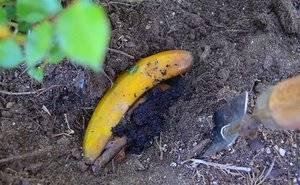 Удобрение из банановой шкурки