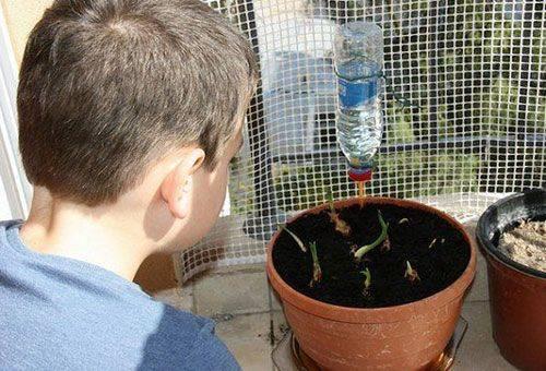 автополив растений пластиковой бутылкой